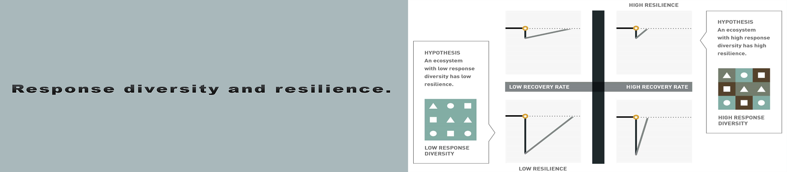 Response diversity and resilience