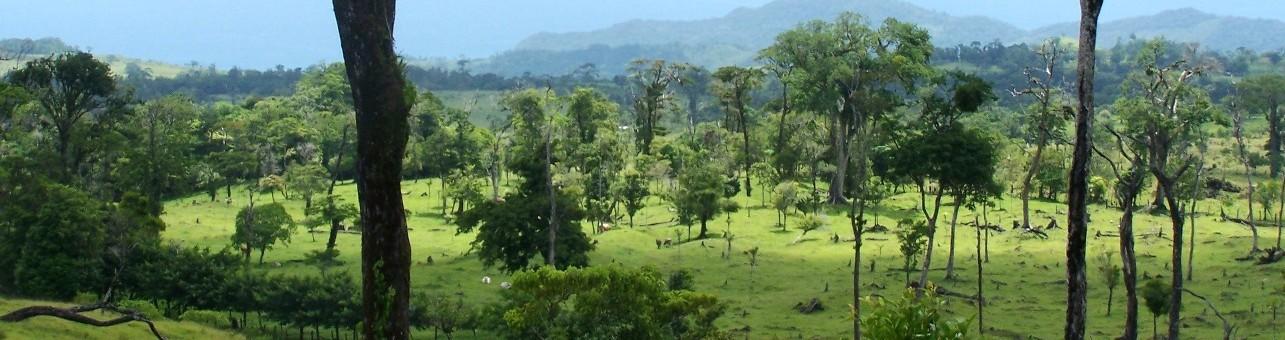 Ecología de Paisajes Fragmentados