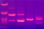 Recursos-geneticos