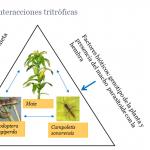 Respuesta del parasitoide Campoletis sonorensis a los factores ambientales en relación su eficiencia de control biológico sobre el herbívoro Spodoptera furgiperda en maíz